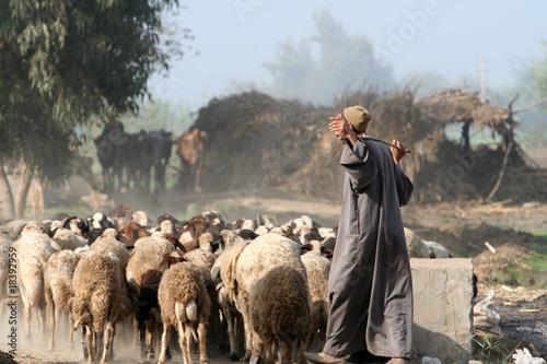 Fotografia herder in egypt