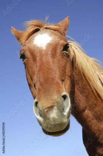 goofy horse head Canvas Print