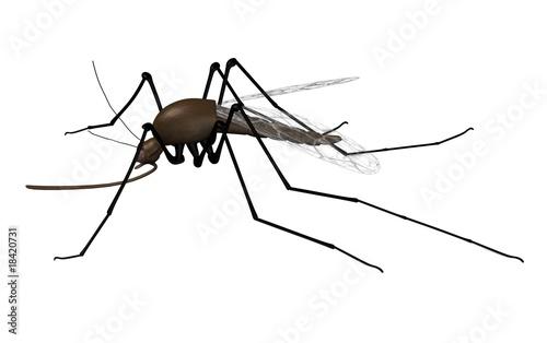 mosquito Billede på lærred