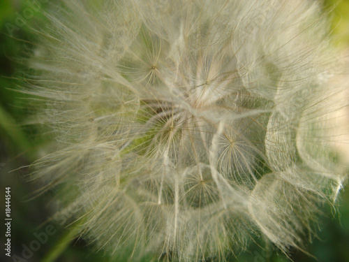 Canvas Prints Dandelions and water Warm (4)