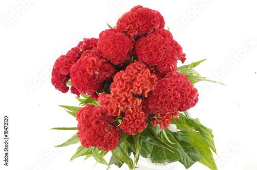 Bright red cockscomb bouquet Fototapet
