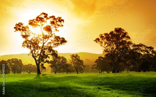 Printed kitchen splashbacks Australia Sunset Field