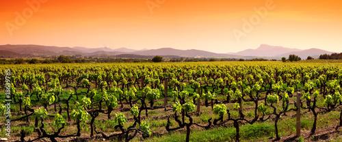 Fotomural vigne
