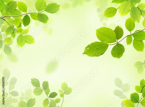 leaves - 18680119