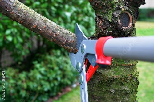 Obraz na płótnie tree pruning