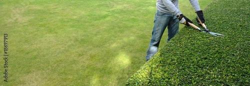 Fotografía pruning a hedge