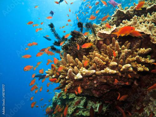 Cuadros en Lienzo Coral on Great Barrier Reef Australia