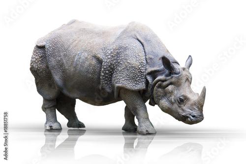 Foto op Aluminium Neushoorn Nashorn wd346
