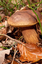 Toadstall On Forest Floor