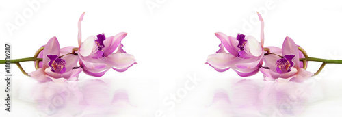 Papiers peints Orchidée beautiful purple orchids lying on white background with water