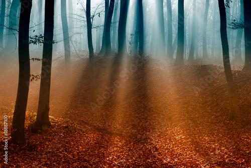 ciemny-jesienny-las-z-pierwszym-swiatlem-slonca
