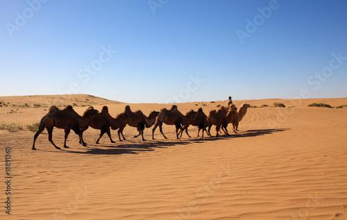Spoed Foto op Canvas Camel safari