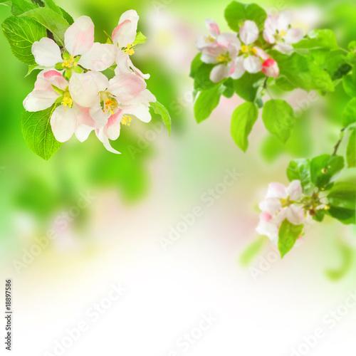 Naklejki o różnych zastosowaniach kwiat-jabloni