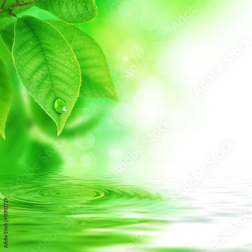 Fototapeta liście   zielone-liscie-z-kropelka-wody