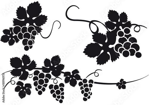 Fotografía  uvas vid racimo silueta