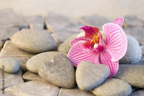 Acrylic Prints Orchid Steinherz und Orchidee