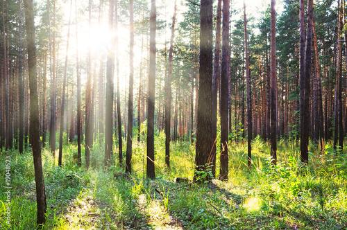 Fototapeten Wald sunset
