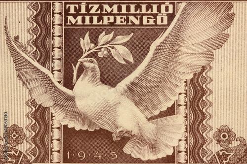Photo  La colombe de Hongrie