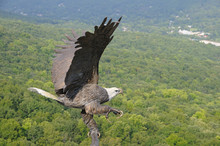 Eagle Flying Over Valley Composition