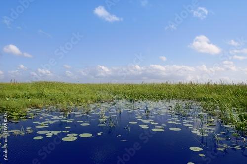 Poster de jardin Parc Naturel Blue sky in Florida Everglades wetlands green plants horizon