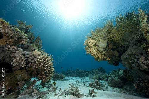 Fotografie, Obraz  Ocean,coral and fish