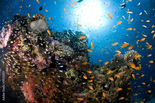Poster Coral reefs paysage sous marin, mer Rouge, Egypte