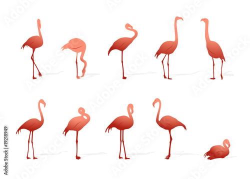 Canvas Prints Flamingo Bird flamingo collection