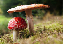 Toad Stool 1