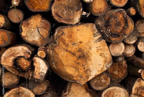 Fotografie, Obraz  Cut trees