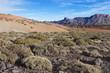 Teide Nationalpark - Teneriffa - Tenerife