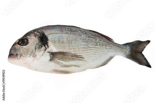 Poster Fish Orata