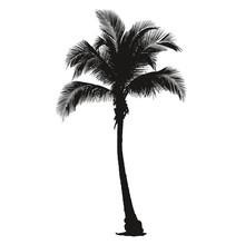 Palmier Très Détaillé - Detail Of A Palm Tree