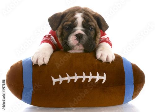 Fotografie, Obraz  bulldog puppy wearing red jersey laying on stuffed football