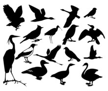 Collection Of Silhouettes Of Birds. Vector Illustration