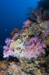 Fototapeta na wymiar Récif, Ocean Indien, Maldives