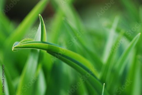 Blurry gras leaves