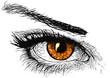 canvas print picture Orange Eye