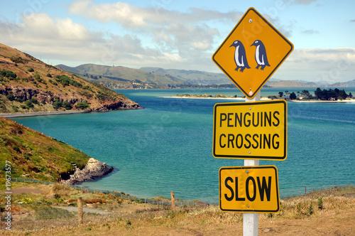 Photo  Panneau Penguins dans la péninsule de l'Otago - New Zealand