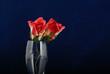 róże w kieliszku