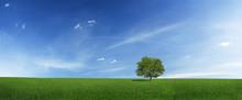 Lonely Tree On A Green Field (XXXLarge)