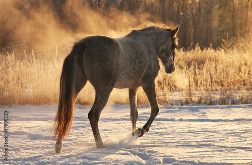 Horse in winter Canvas Print