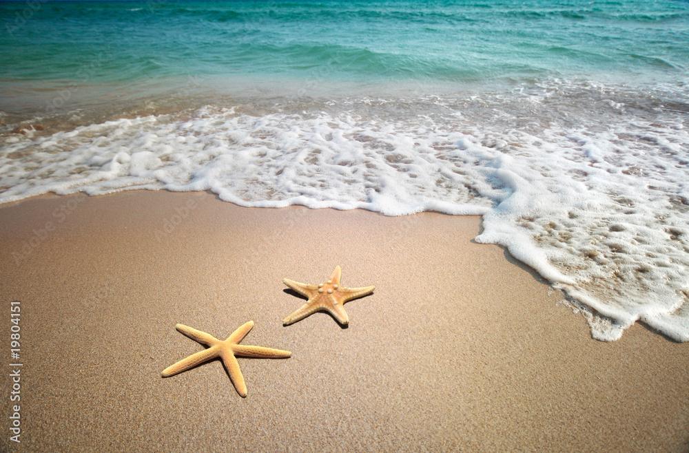 Photo two starfish on a beach
