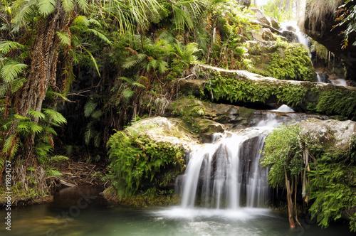Fotobehang Watervallen Rainforest waterfall