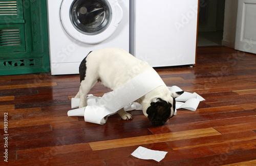 Photo chien trompant l'ennui en déchirant du papier dans cuisine