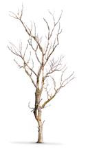Tronc D'arbre Mort Isolé Sur Un Fond Blanc - Climat
