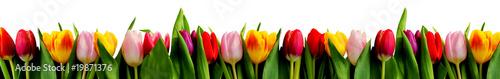 Fototapeta rang de tulipes
