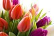 Leinwandbild Motiv Dutch tulips