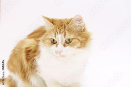 Door stickers Cat kat
