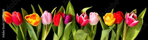 Fotobehang Tulp tulipes fond noir
