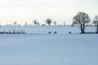 3 Reiter im Schnee